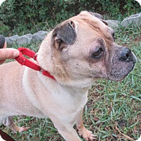 Adopt A Pet :: Brownie - Jacksonville, FL