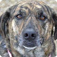 Adopt A Pet :: Emma - Meridian, ID