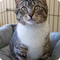 Adopt A Pet :: Chance - Merrifield, VA