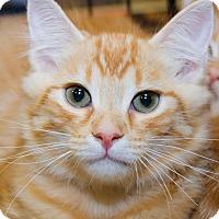 Adopt A Pet :: Waffles - Irvine, CA