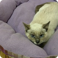 Adopt A Pet :: Baby Blue - Atlanta, GA