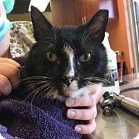 Adopt A Pet :: Legend - McHenry, IL