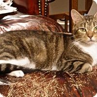 Adopt A Pet :: FiFi - Covington, KY