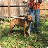 Adopt A Pet :: Tuff - Livingston, TX