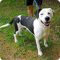 Adopt A Pet :: Dascha - Sautee, GA