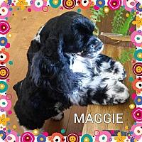 Adopt A Pet :: Maggie - Santa Barbara, CA