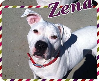 Terrier (Unknown Type, Medium) Mix Dog for adoption in Troy, Michigan - Zena
