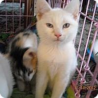 Adopt A Pet :: Redmond, Rourke - Riverside, RI