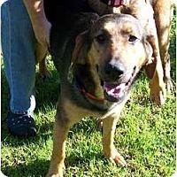Adopt A Pet :: Roxy - Carrollton, GA