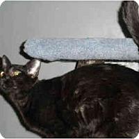 Adopt A Pet :: Kocher - Milwaukee, WI