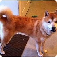 Adopt A Pet :: Cargo - West New York, NJ