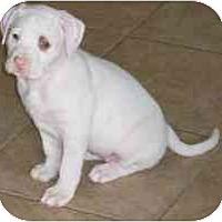 Adopt A Pet :: Gabby - Gilbert, AZ