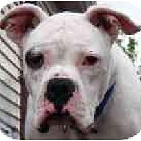Adopt A Pet :: Magoo - Sunderland, MA