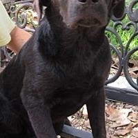 Adopt A Pet :: S848 Rose - Bay Springs, MS