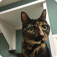 Adopt A Pet :: Honeybun - Medina, OH