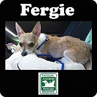Adopt A Pet :: Fergie - Fallston, MD