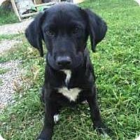 Adopt A Pet :: Moguli - Pending - Saskatoon, SK