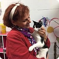 Adopt A Pet :: Vinnie - Manchester, CT