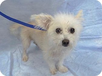 Terrier (Unknown Type, Medium) Mix Dog for adoption in Hawthorne, California - Jonathan