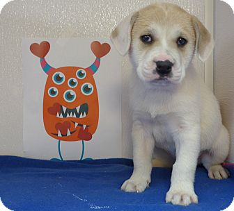 Husky Mix Puppy for adoption in Manning, South Carolina - Twinkle