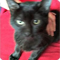 Adopt A Pet :: Bella - Horseshoe Bay, TX