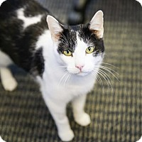 Adopt A Pet :: Hank - Germantown, OH