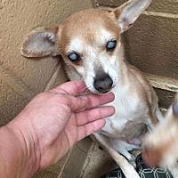 Adopt A Pet :: Dottie - Willows, CA