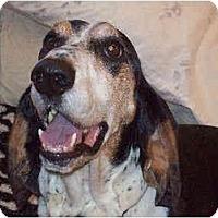 Adopt A Pet :: Warner - Phoenix, AZ