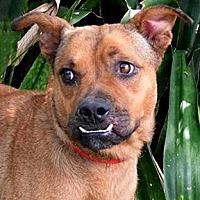 Adopt A Pet :: Trixie - Sebastian, FL