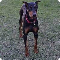 Adopt A Pet :: Sydney - Fort Worth, TX