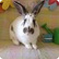 Adopt A Pet :: Flapjack - Paramount, CA