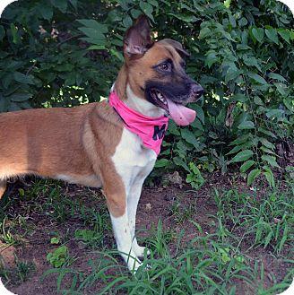Basenji/Shepherd (Unknown Type) Mix Dog for adoption in Fort Worth, Texas - Bernadette