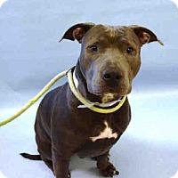 Adopt A Pet :: ODYSSEY - albany, NY