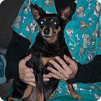 Adopt A Pet :: Minnie - New Martinsville, WV