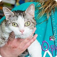 Adopt A Pet :: Opal - Somerset, PA