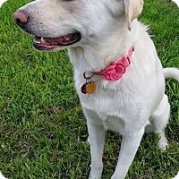Adopt A Pet :: Phoebe - Austin, TX