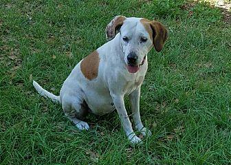 Labrador Retriever/Hound (Unknown Type) Mix Dog for adoption in Chiefland, Florida - Marta