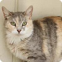 Adopt A Pet :: Chenille - Yucaipa, CA