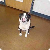 Adopt A Pet :: KASEY - Temple, TX