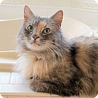 Adopt A Pet :: Ester - Arlington, VA