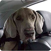 Adopt A Pet :: Trooper - Eustis, FL