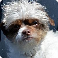 Adopt A Pet :: Starbuck-Adoption pending - Bridgeton, MO