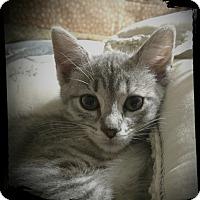 Adopt A Pet :: Grasshopper - Richmond, VA