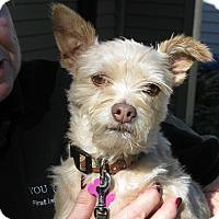 Adopt A Pet :: Mocha - Salem, OR