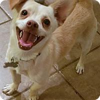 Adopt A Pet :: Hansel - Phoenix, AZ
