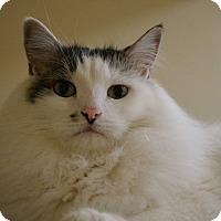 Adopt A Pet :: Chloe & Posey - Salem, NH
