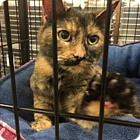 Adopt A Pet :: Meadow - Simpsonville, SC