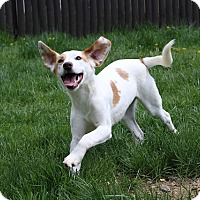 Adopt A Pet :: Patches - Sparta, NJ