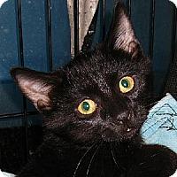Adopt A Pet :: Lono - Albuquerque, NM