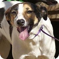 Adopt A Pet :: Shana - Oakland, AR